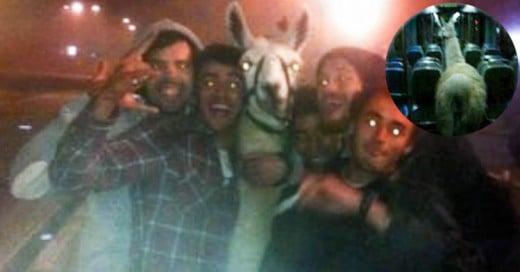 Estos adolescentes borrachos robaron una llama de un circo para llevarla de fiesta por la ciudad