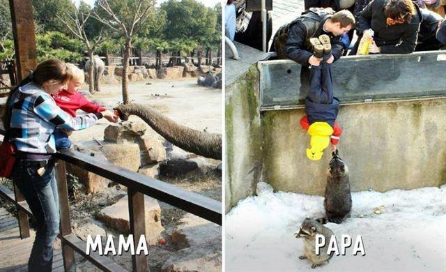 Diferencias entre mamá y papá zoológico