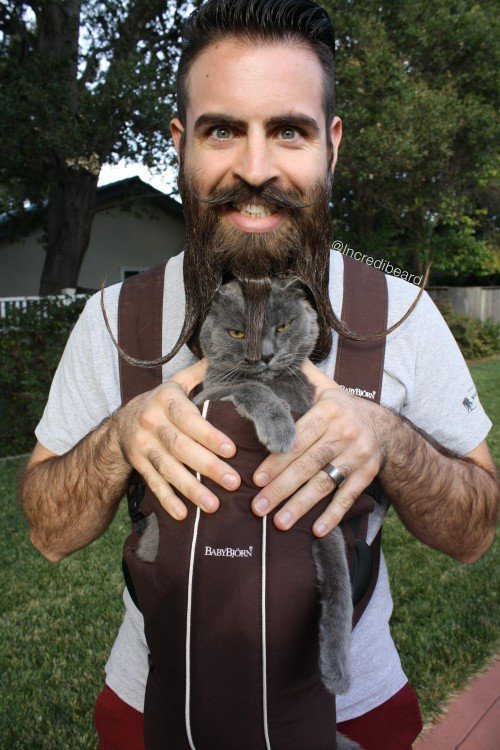 Incredibeard Gato