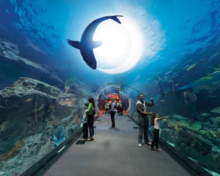 acuario mall centro comercial dubai
