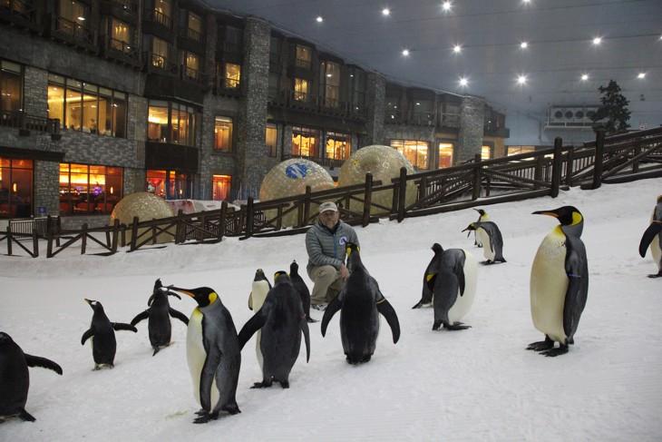 pinguinos dubai ski