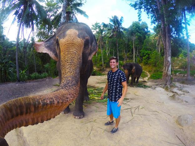 elefante toma selfie con humano