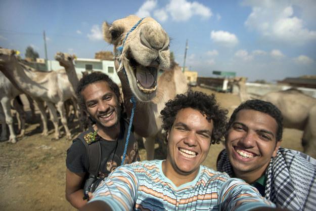 camello sonriendo en selfie con amigos