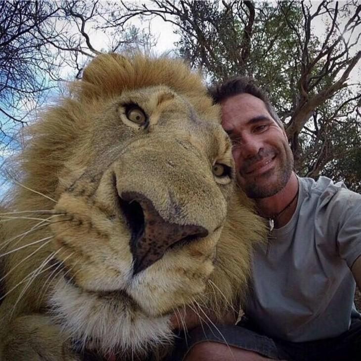 hombre se toma foto selfie con un leon macho
