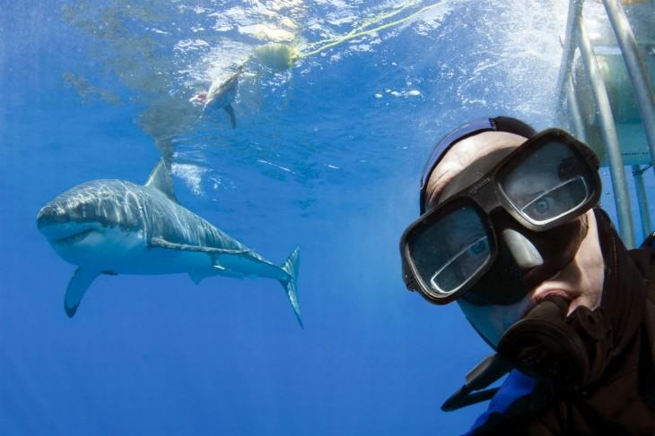 selfie con tiburon blanco