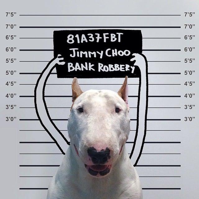 bull terrier jimmy choo en la carcel