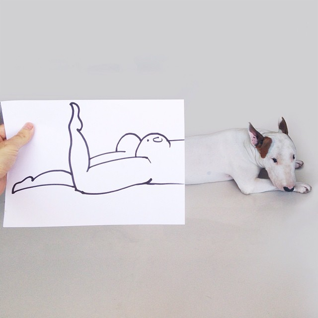 bull terrier jimmy choo con hoja yuxtaposicionada nalgas