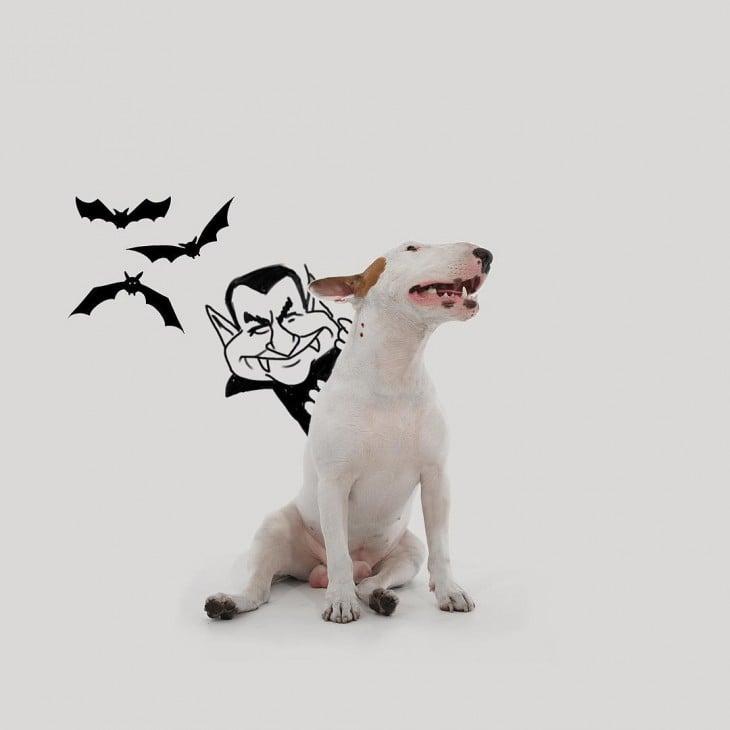 bull terrier jimmy choo dracula vampiro