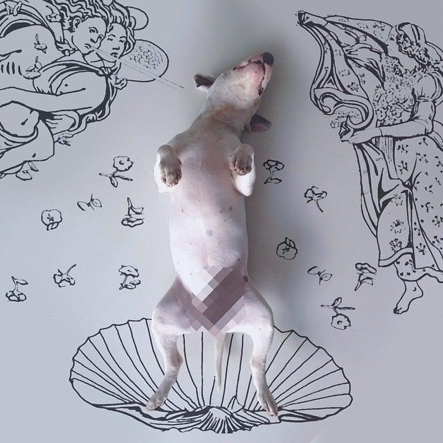 bull terrier jimmy choo censurado dormido con angeles