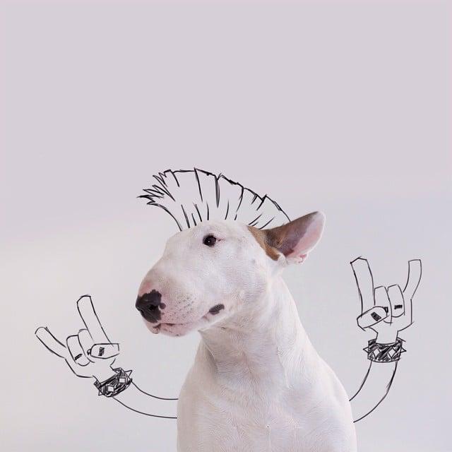 bull terrier jimmy choo punk mohawk