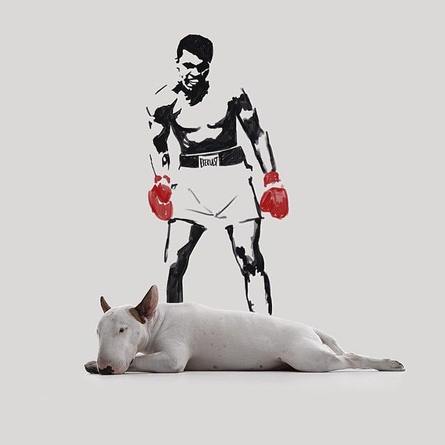 bull terrier jimmy choo con mohamed ali