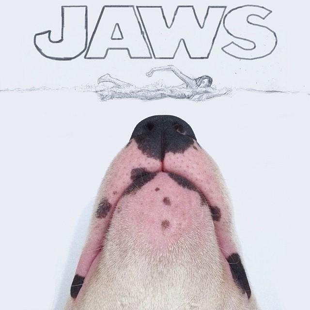 bull terrier jimmy choo tiburon