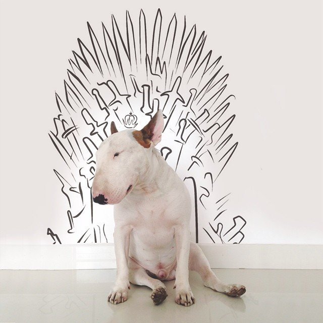 bull terrier jimmy choo juego de tronos