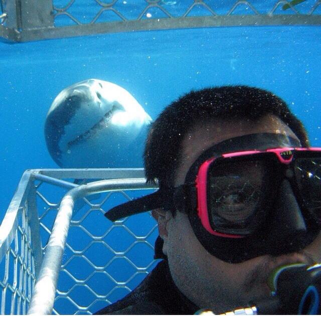 foto con tiburon blanco selfie