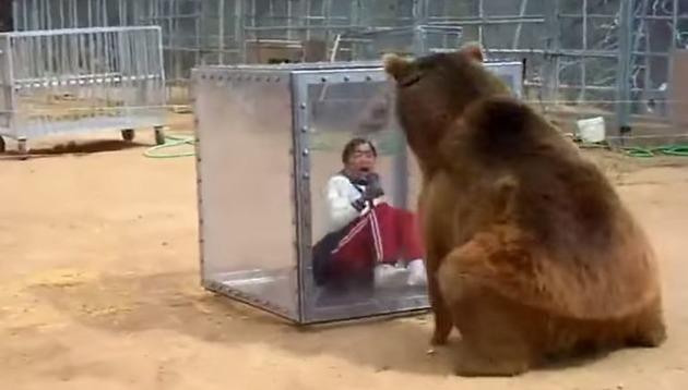 oso grizzly con mujer grabando desde una caja de plastico