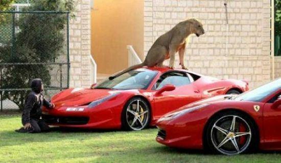 leon dubai ferrari mascota