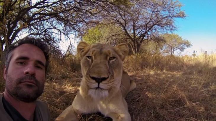 hombre se toma selfie con leona salvaje
