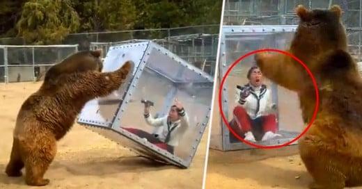 Programa de TV japonesa pone a un oso junto a mujer en caja de plástico