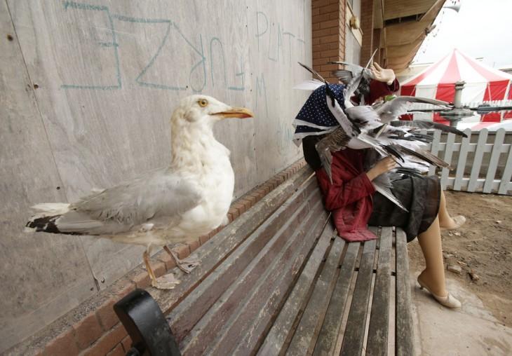 mujer acosada por palomas en dismaland