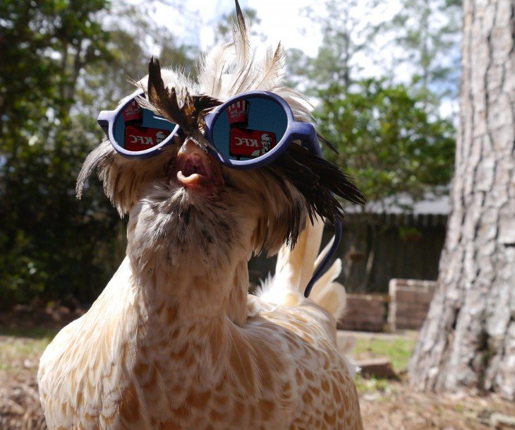 Pidió que photoshopearan a su pollo e internet respondió