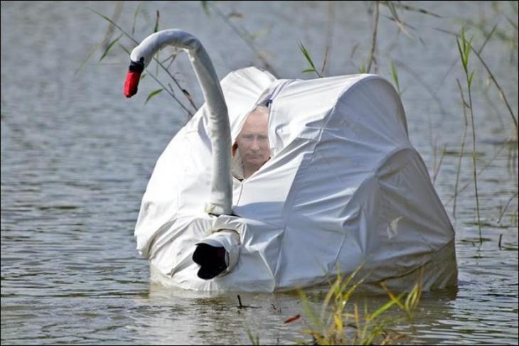 Internet trollea a Putin dentro de su batiscafo con una batalla de Photoshop cisne