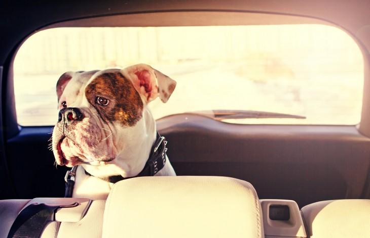 perro encerrado en auto