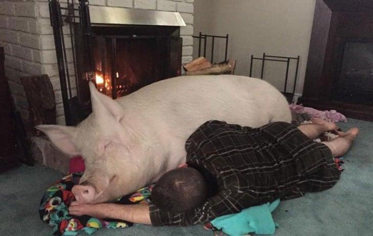 hombre recostado con cerdo enorme