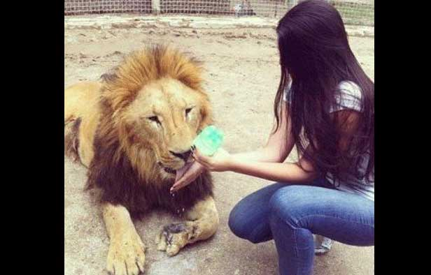 novia de narco con leon