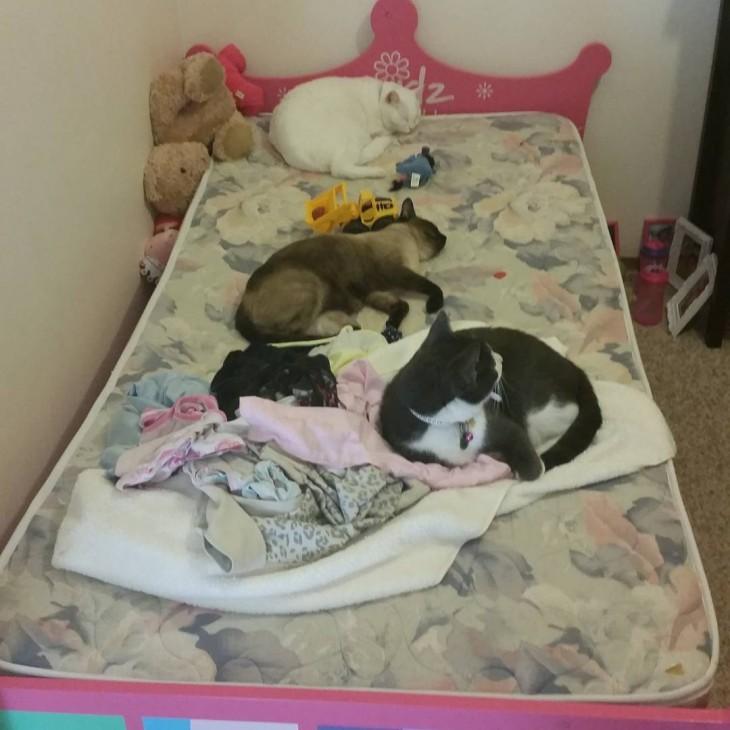 cama sin las cobijas puestas