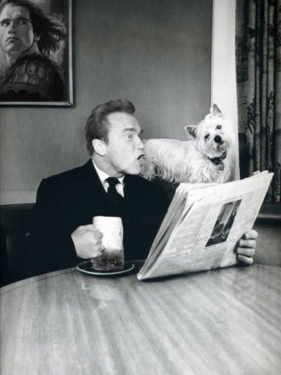 leyendo el periódico, Photoshop de Schwarzenegger