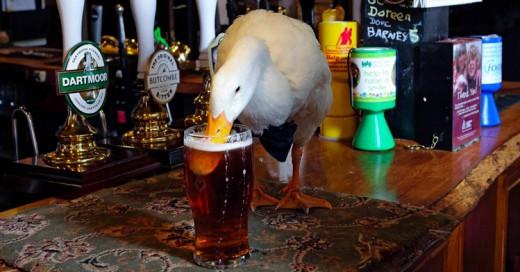 Un Pato entra a un bar, se pone borracho y se pelea con un Perro