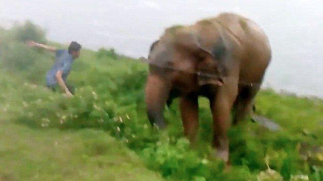 hombre borracho peleando con un elefante