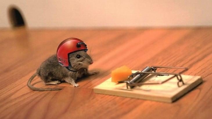 Ratón con casco