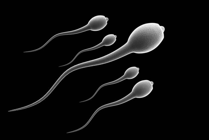 Espermas avanzan