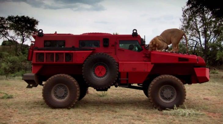 marauder con un leon en el cofre
