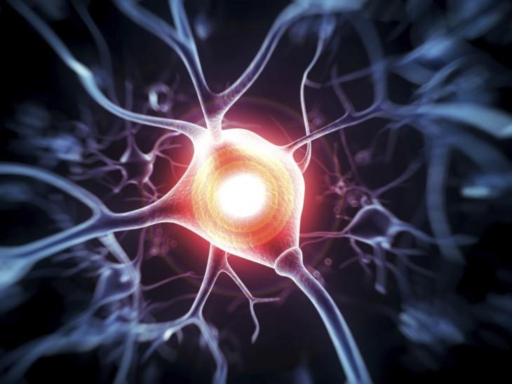 Neurona con melatonina