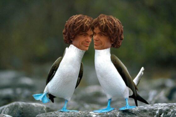 Pareja de pingüinos con cabezas humanas