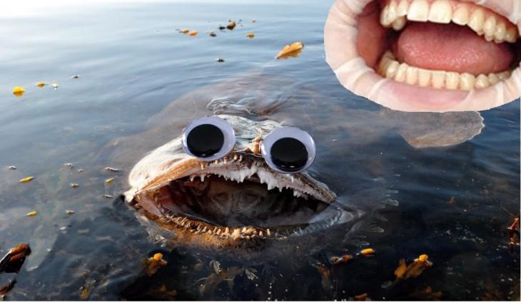 Monstruos en la laguna
