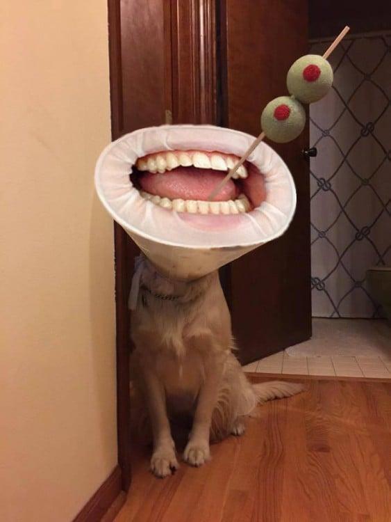 Perro con aceitunas
