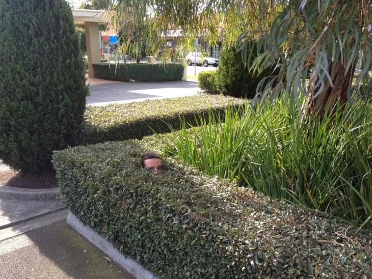 Escondido entre los arbustos