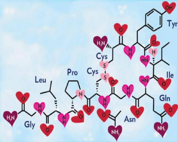 Imagen usando la composición de la Oxitocina