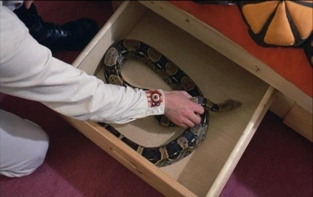 Serpiente guardada en el cajón