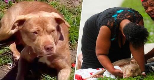 Perra heroína: ¡Salvó a su dueña de ser asesinada!