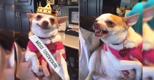 ¡Estos son los mejores Memes del vergonzoso Fail en Miss Universo 2015!