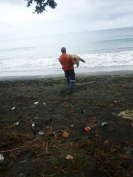 devuelve a tortuga al mar
