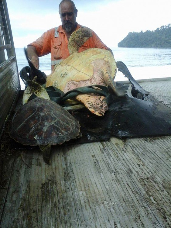 rescata a tortuga del mercado negro