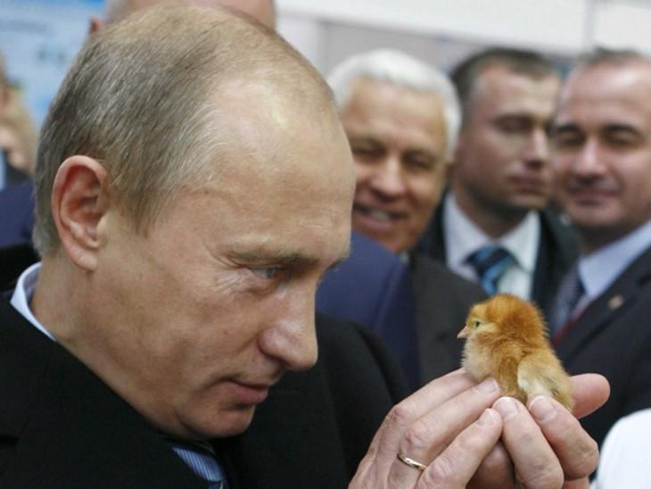 Putin sostiene un pollito