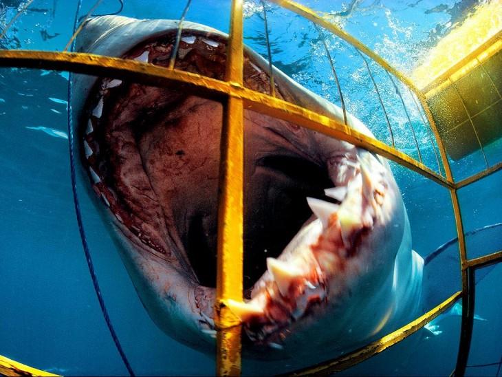 Ataque de tiburón blanco en Sudáfrica