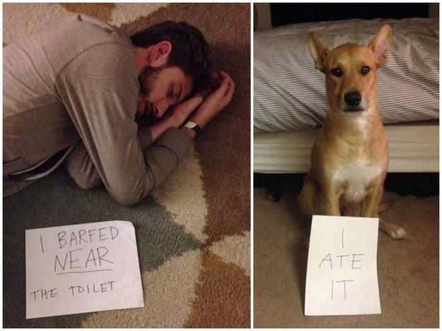 borracho fail perro nota