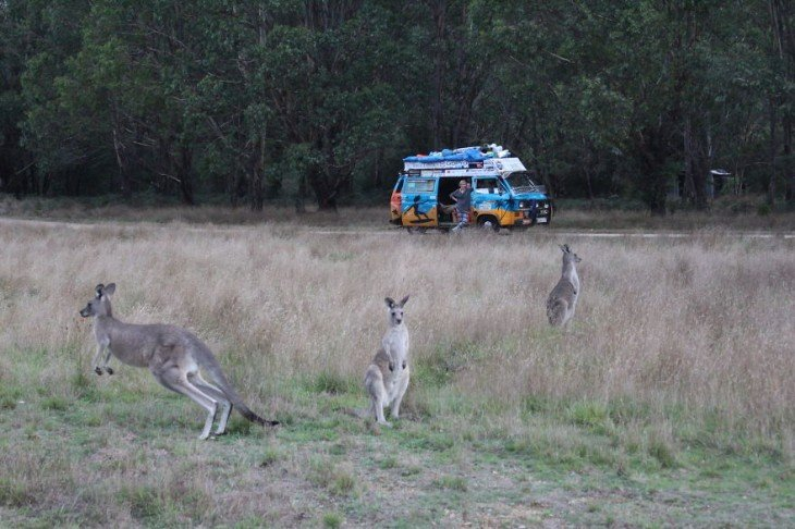 pareja de polonia canguros